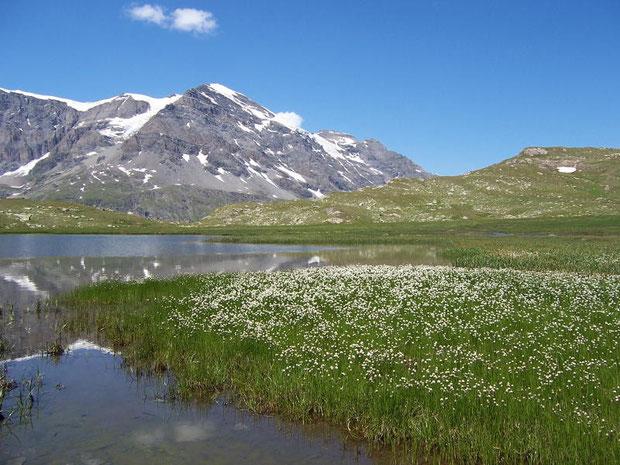 Grand Combin und Lac de Tsofeiret