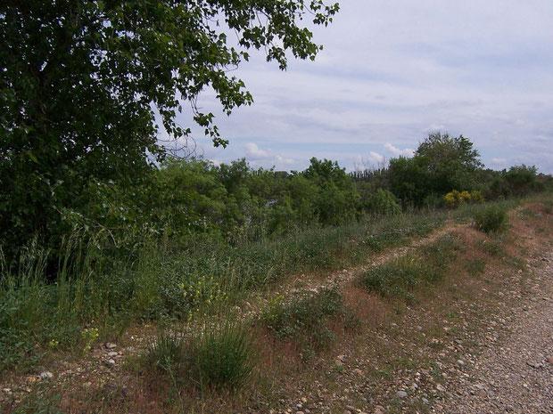 Rhônekanal bei Avignon Uferweg mit Mischwaldvegetation