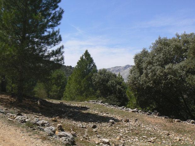 Wanderweg oberhalb des Embalse del Tranco