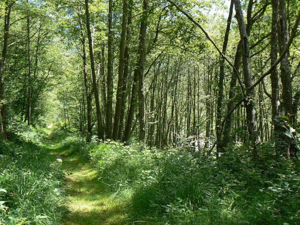 Flussauenwald im Onsernonetal