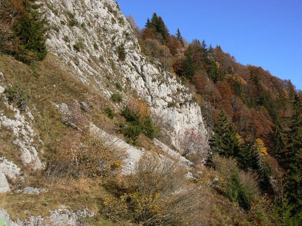 Xerotherme Felsfluren mit angrenzendem Buchen-Mischwald