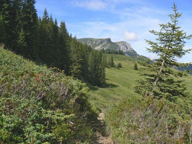 Wacholderlandschaft mit anschliessendem Flachmoor