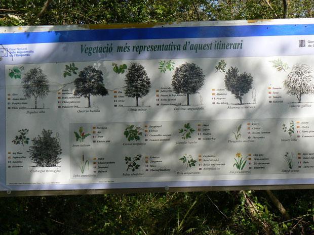 Tafel im Park mit Pflanzenbeschreibungen