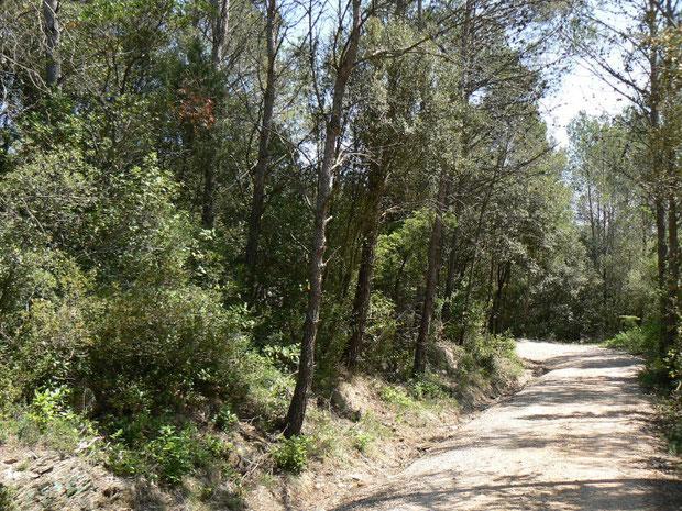 Wanderweg am Embalse de Boadella