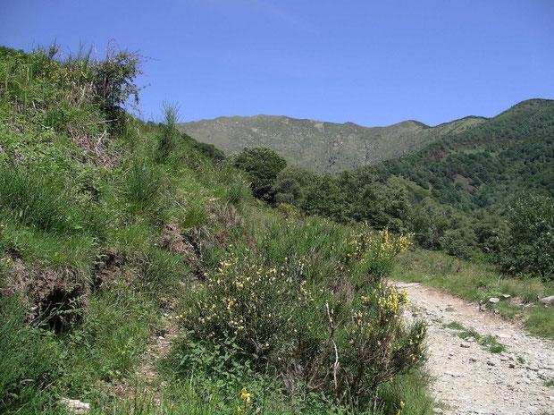 Zur Alpe di Coransú im Sommer