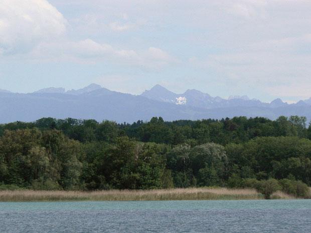 Grande Gariçaie vom See aus betrachtet (im Vordergrund der Schilfgürtel, im Hintergrund der feuchte Auen-Mischwald)