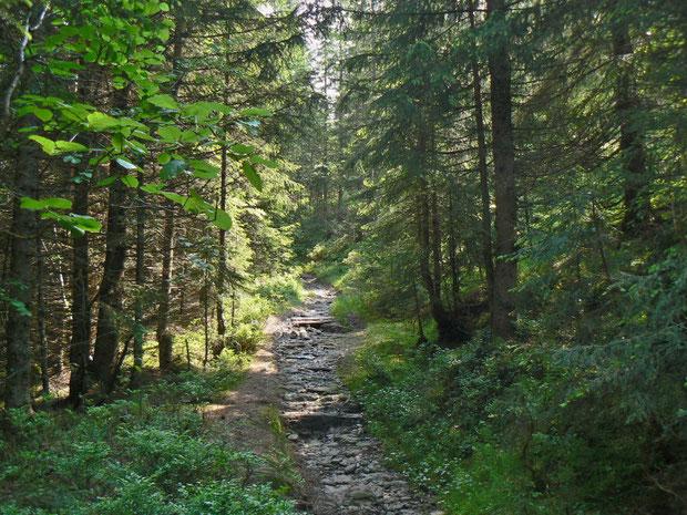 Bergweg zum Jänzi