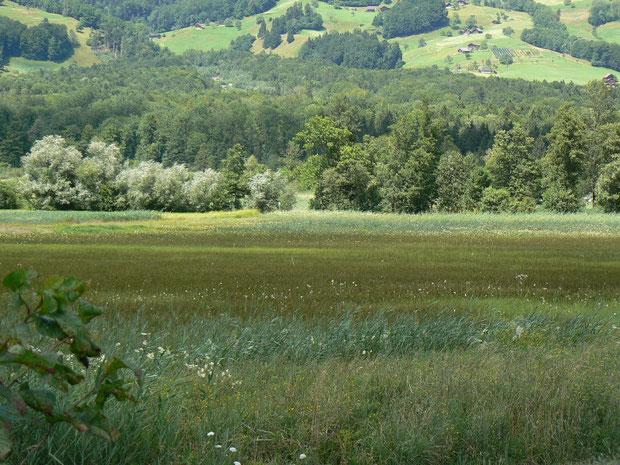 Blick zum Gebiet Steinibach (Wald im Hintergrund)