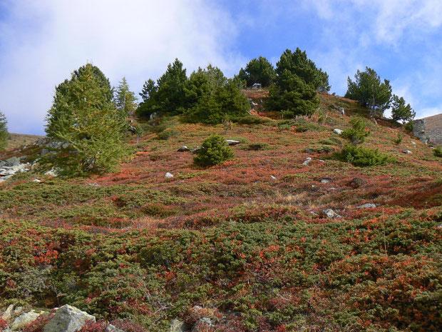Montagne de Malève