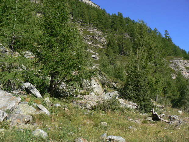 Wanderweg von Täsch nach Zermatt