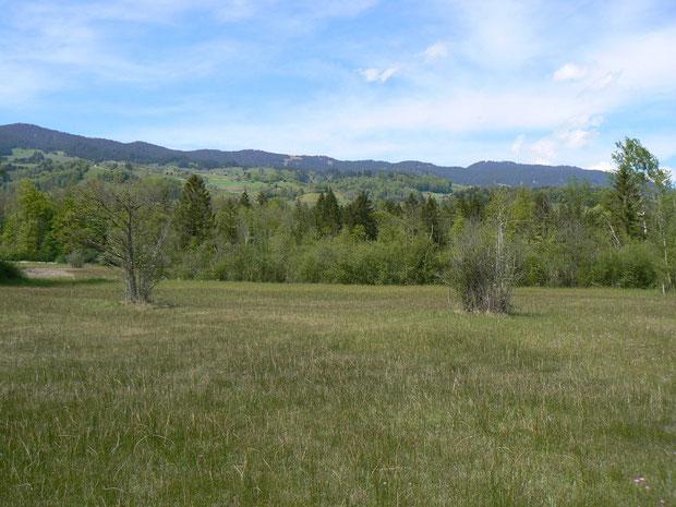 Blick auf das Flachmoorgebiet mit der Landwirtschaftszone im Hintergrund