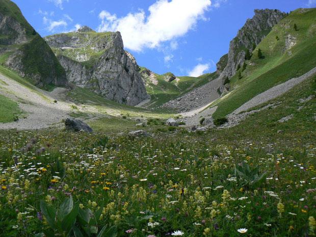 Alpmatte mit Blumenvielfalt