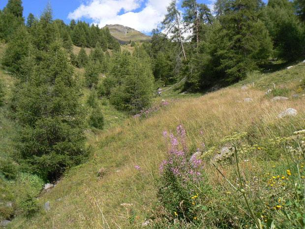 oberhalb La Forclaz