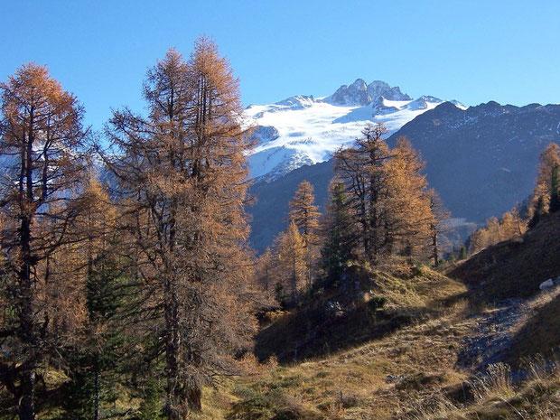 Lärchenwald beim Col de la Forclaz