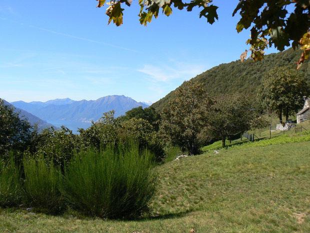 Sementina oberhalb San Defente bei Monti di Boscaloro