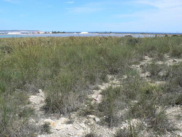 Parc Natural de las Salinas de Sta. Pola bei El Pinet
