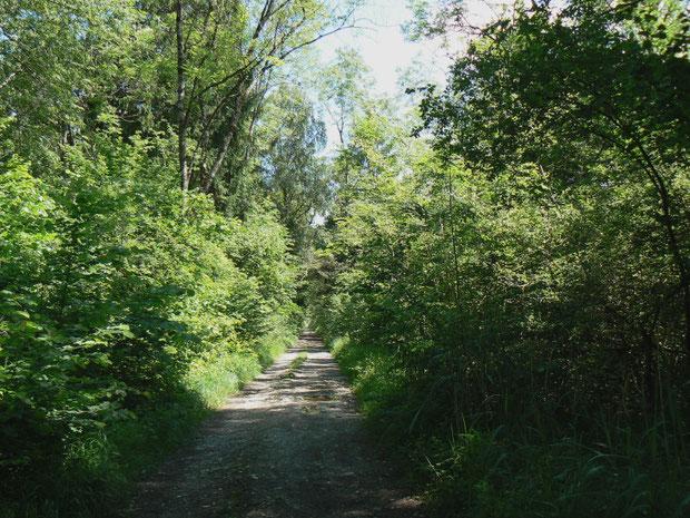 Der Auen-Mischwald mit dem Wanderweg