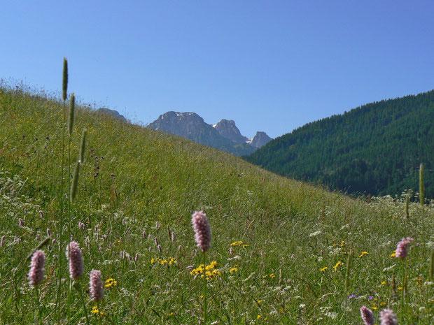 Naturwiese bei Ciernes Picat VD