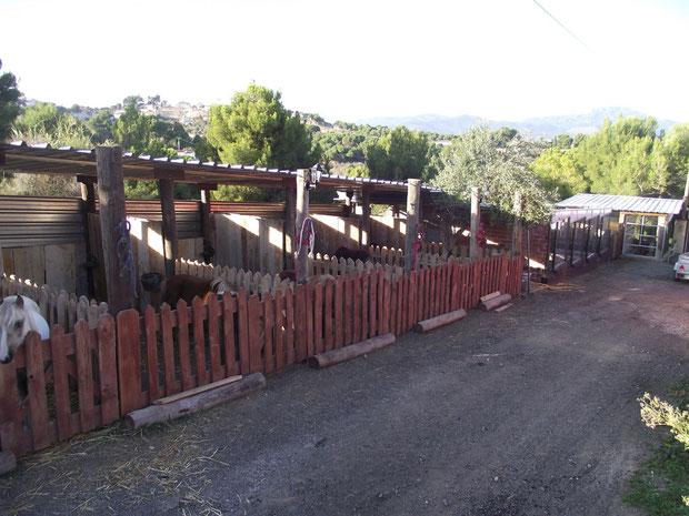 Ponis Centro Hipico Los Hermanos