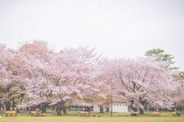 東京 小金井公園 出張撮影 家族写真 桜 女性カメラマン