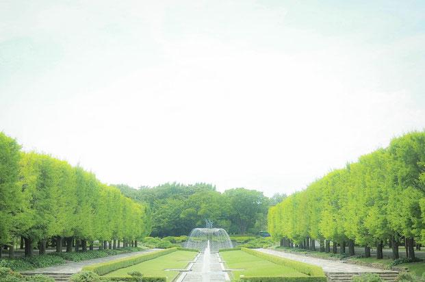 出張撮影 女性カメラマン 国営昭和記念公園 公園フォト 料金安い