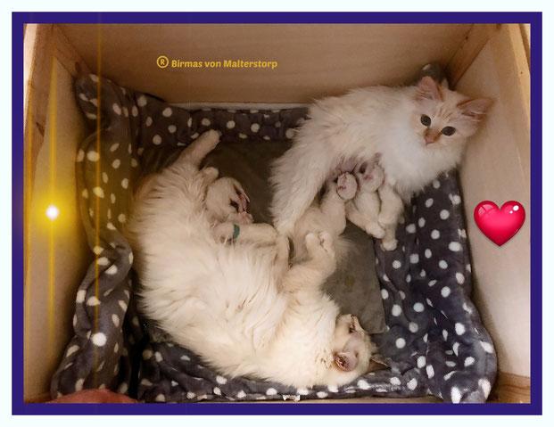 Mama Energia mit ihren Babys und Freundin Leonoré
