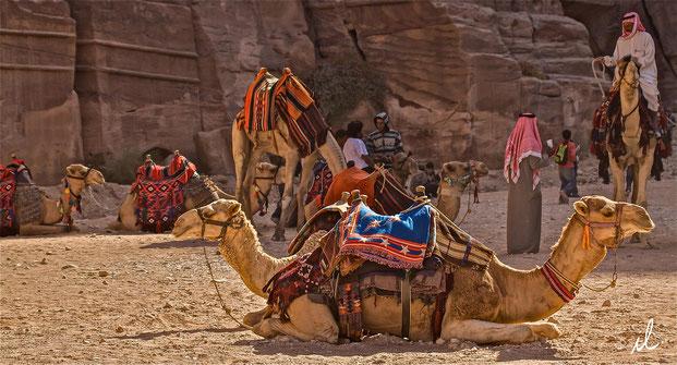 Le chameau à deux têtes, Pétra, Jordanie
