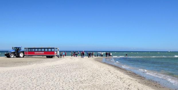 """Sand, Meer und Traktorbus """"Sandormen"""": Grenen ist zu jeder Jahrszeit ein beliebtes Ziel"""