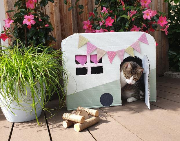 DIY - Ein Kitty Camper aus Karton