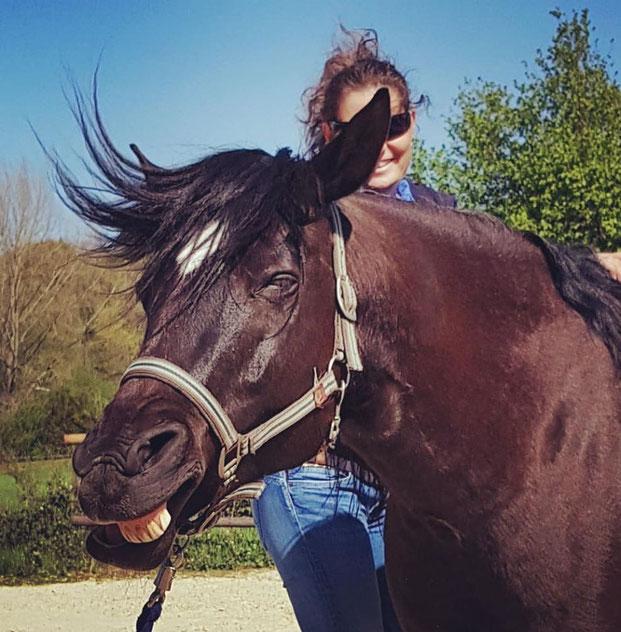 Pro-Equi - Osteopathie am Pferd, Smiling horses ;-) Diana Tiebes
