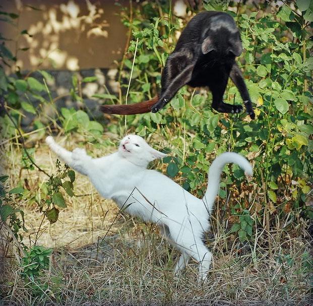 Фотографы шутят - кошки-7