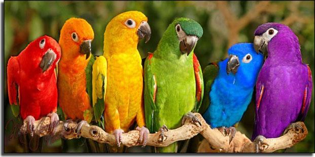 многоцветная фотография-8