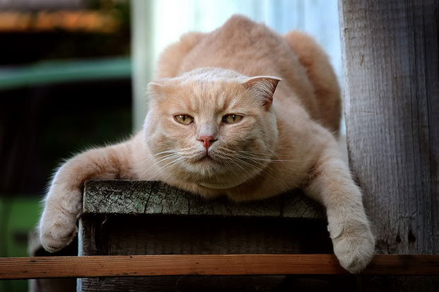 Фотографы шутят - кошки-18