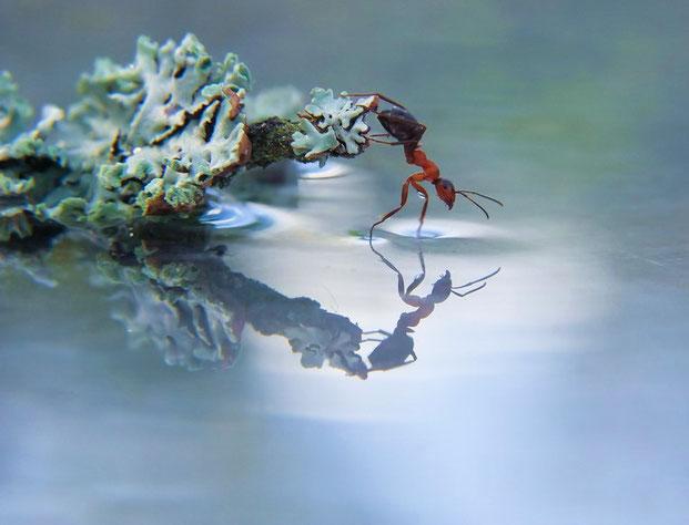 фотографии природы-4