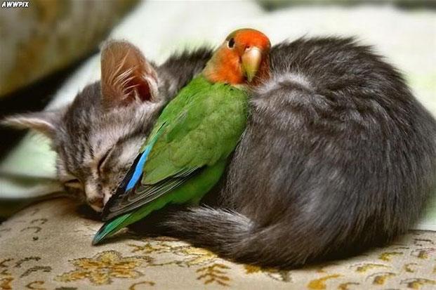Фотографы шутят - кошки-4