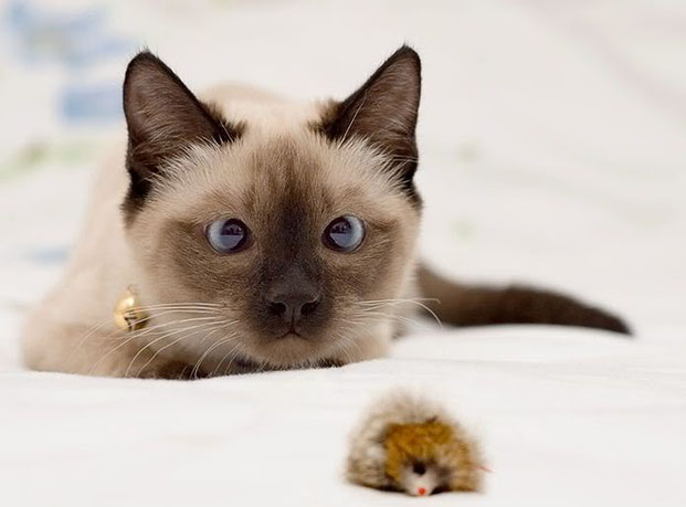 Фотографы шутят - кошки-1