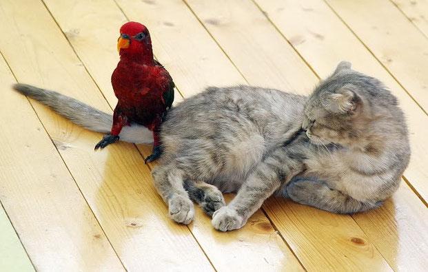Фотографы шутят - кошки-16