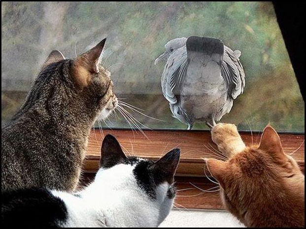 Фотографы шутят - кошки-15