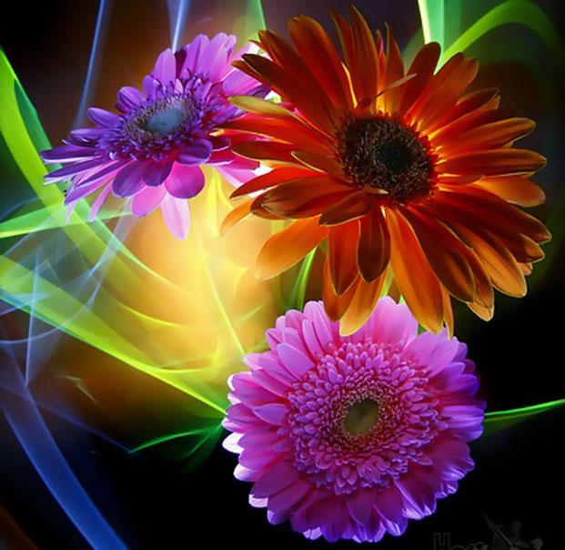 светографика цветов фото