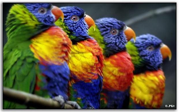 многоцветная фотография-12
