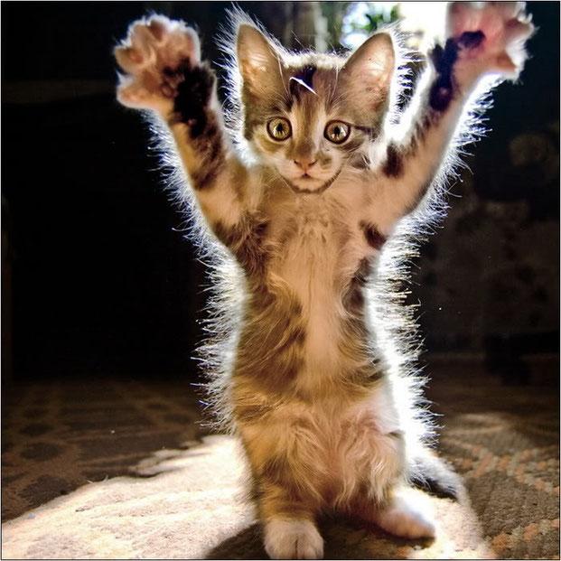 Фотографы шутят - кошки-11