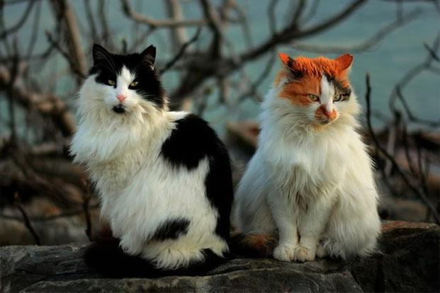 Фотографы шутят - кошки-13