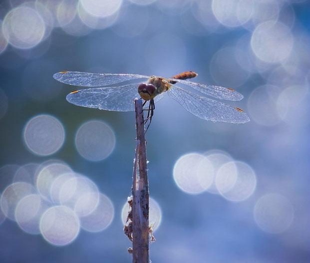 фотографии природы-15
