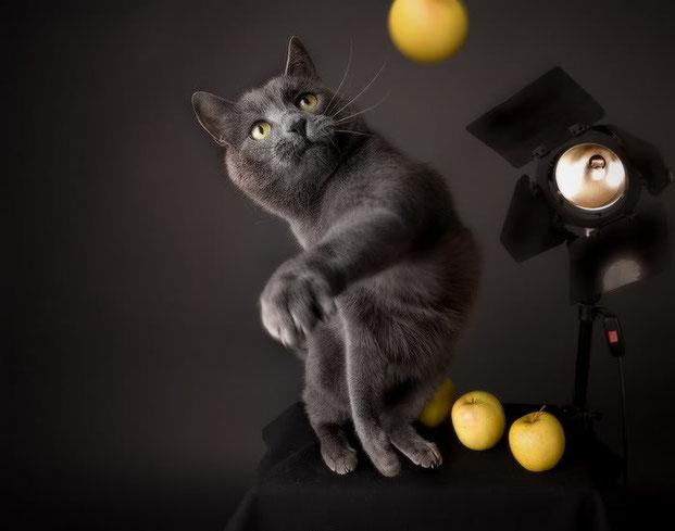 Фотографы шутят - кошки-17