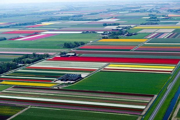 поля тюльпанов-5