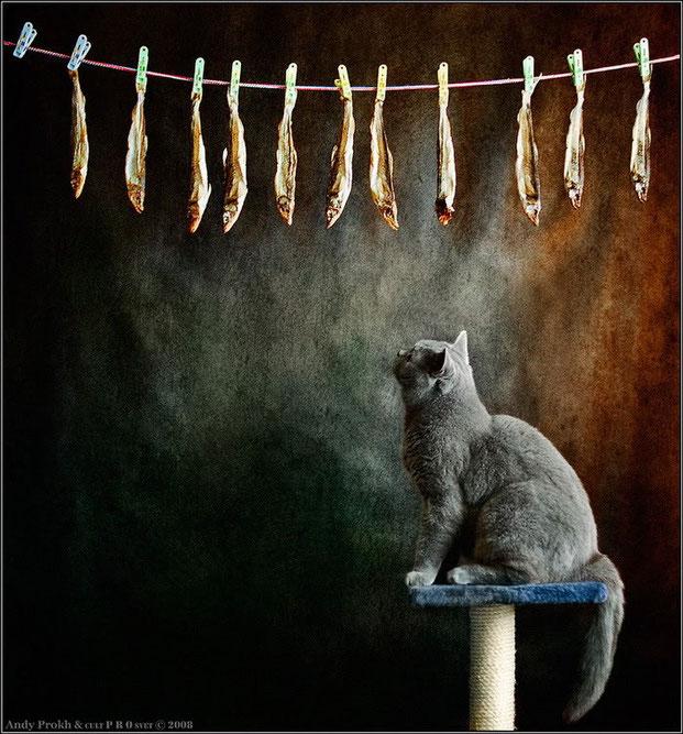 Фотографы шутят - кошки-6
