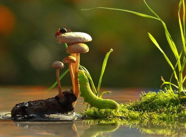 фотографии природы-8