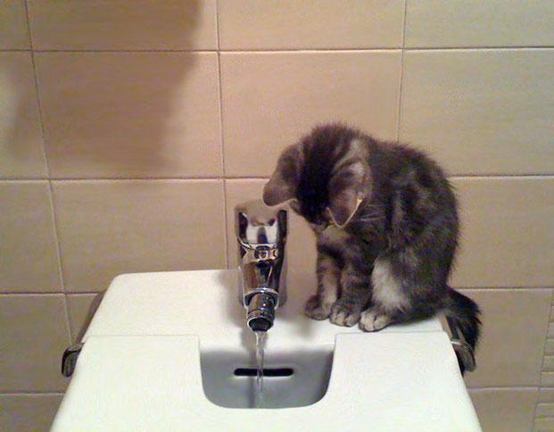 Фотографы шутят - кошки-14