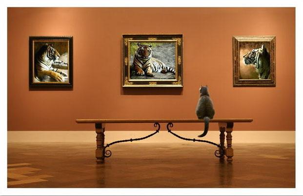 Фотографы шутят - кошки-10