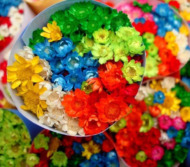 многоцветная фотография-20